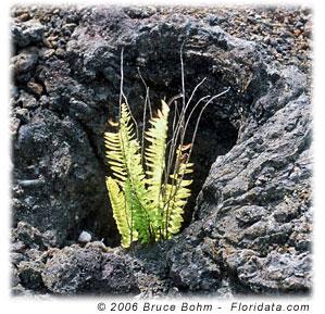 ferns growing in a tree hole