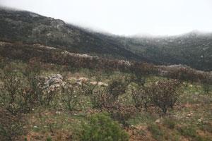 A burned hillside