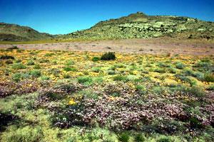 Goegab Nature Preserve