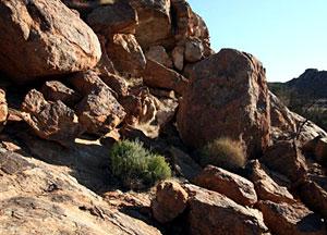 Euphorbia mauritanica habitat