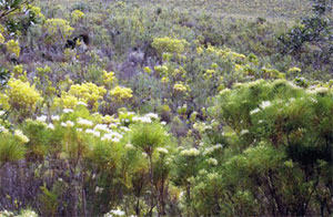 Fernkloof Nature Preserve