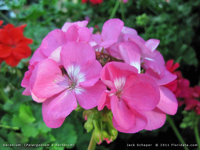 Permalink to Home Garden Names