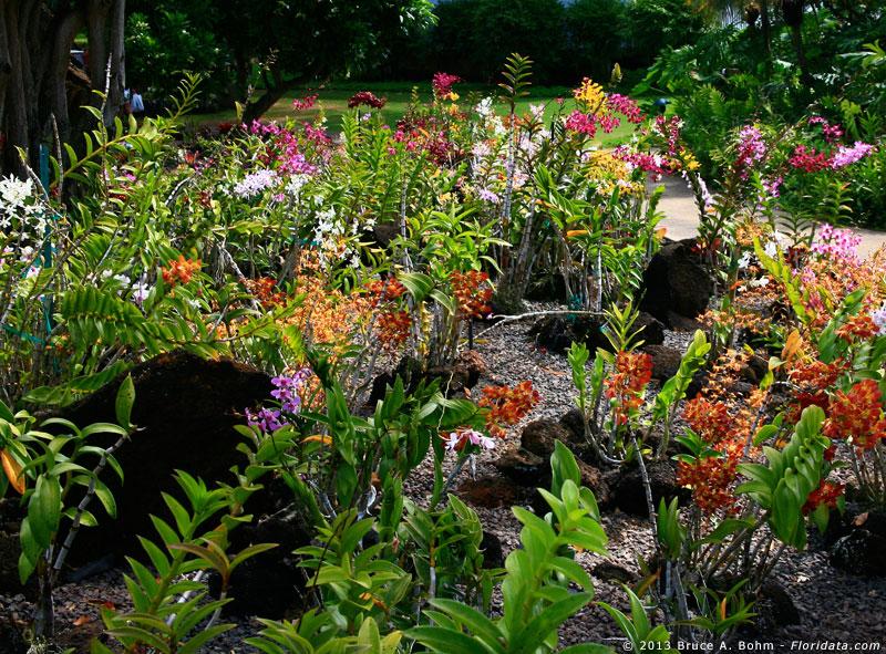 Kiahuna Plantation orchid garden