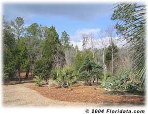 Floridune Hill